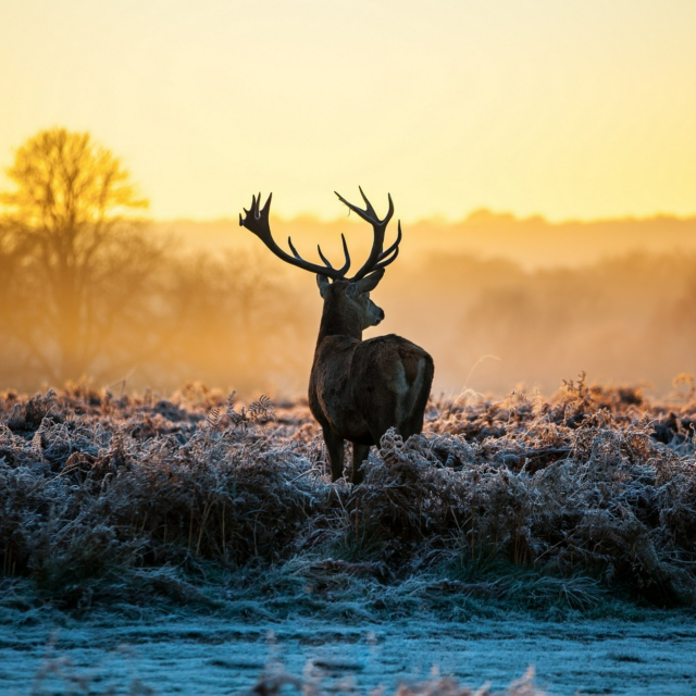 The Touch of Morning, The Burning of the Frost