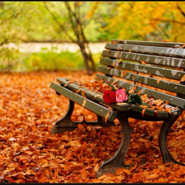 Autumn leaves falling down like pieces into place