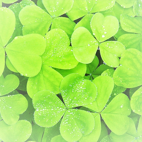 cloves and clovers