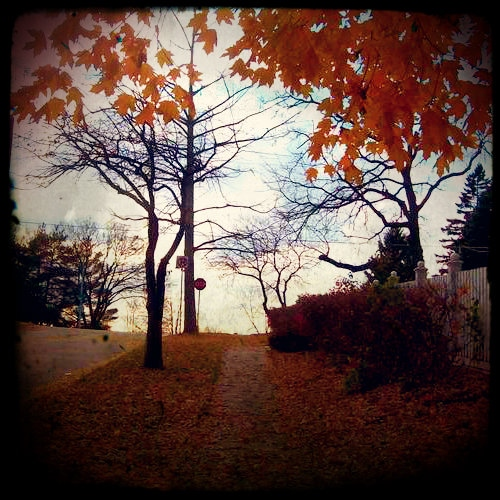 Autumn Air and Crushed Leaves