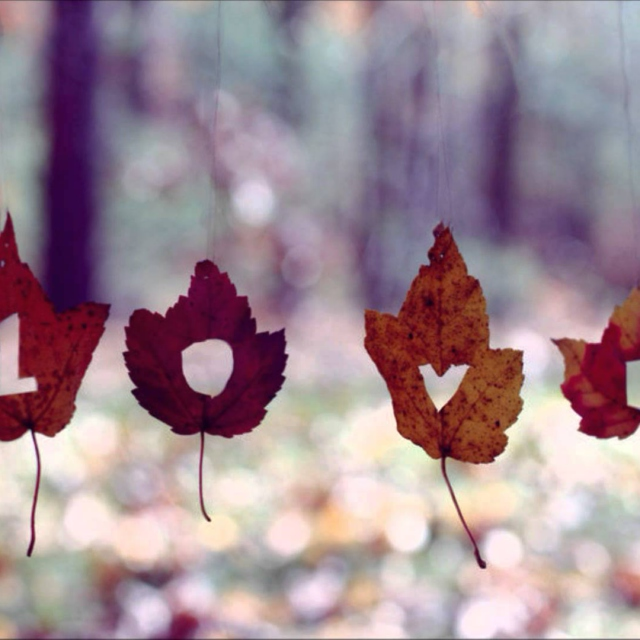 Even the leaves fall for you <3