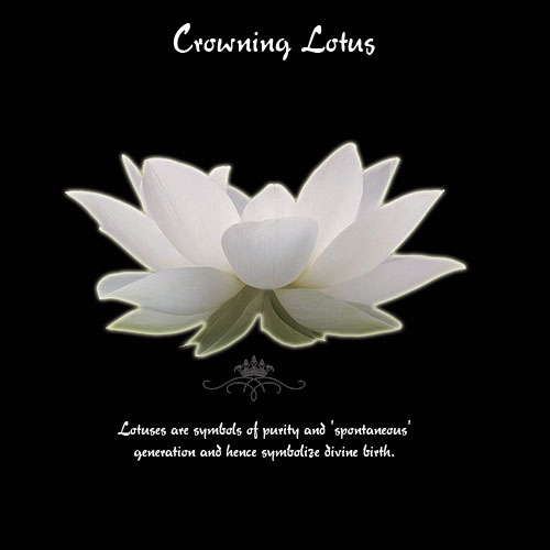 Crowning Lotus