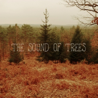 the sound of trees