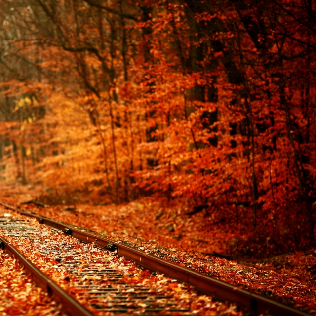 red scattered leaves