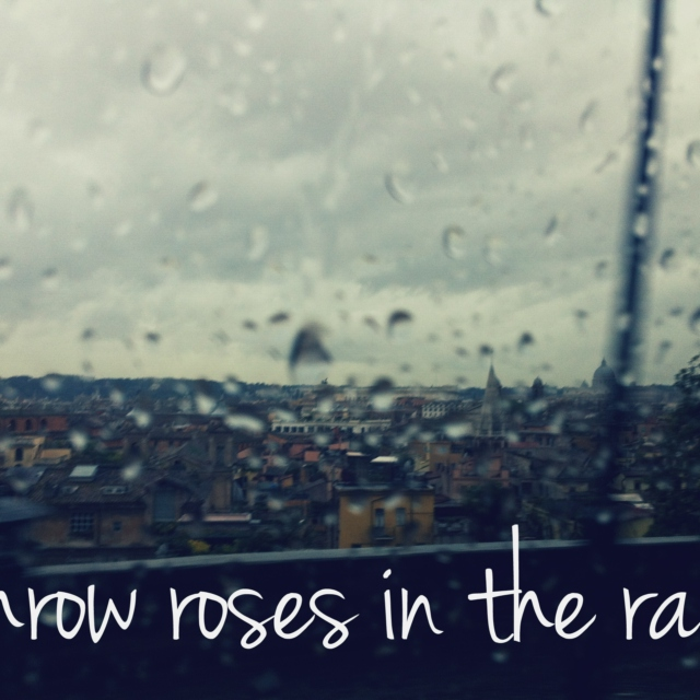 throw roses in the rain