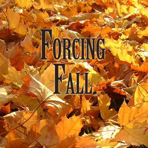 Forcing Fall