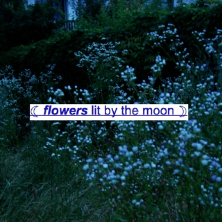 ☾ flowers lit by the moon ☽