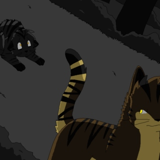Darkstripe/Tigerstar mix