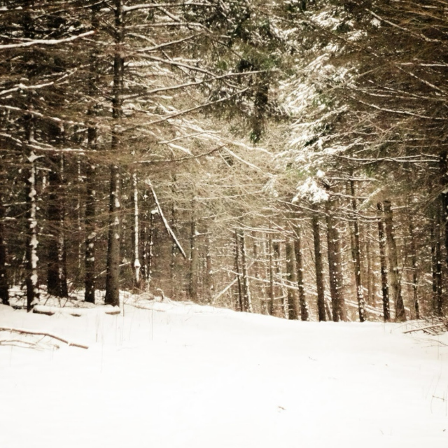 The Wintry Woods
