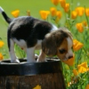 What problems, all I see is a flower field running amuck with puppies