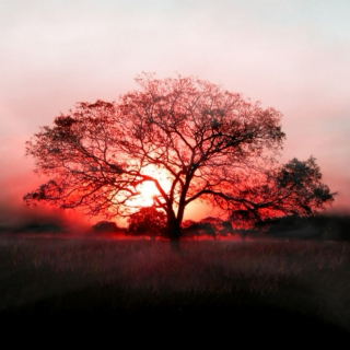 See the sunset turning red, let all be quiet in your head.