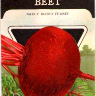 phat beets and washing machine rhythms
