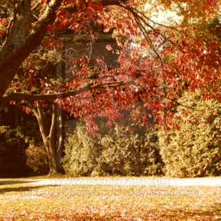 Slowly drifting towards those red Leaves, and cool winds. Fall is coming