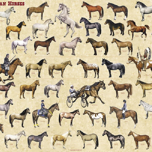 horses of different forces