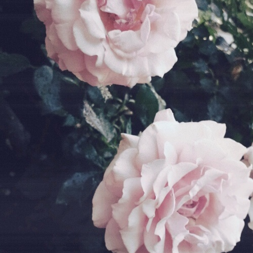 long live the rose that grew from concrete when no one else even cared