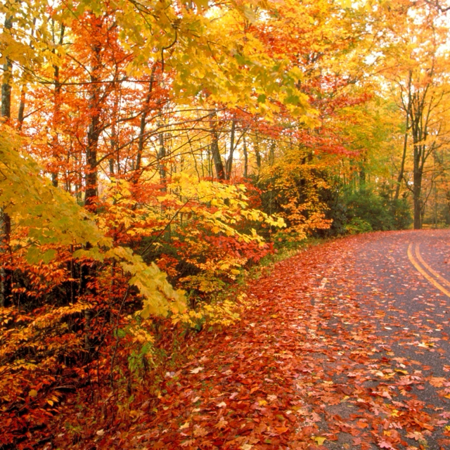 Fall Driving Mix