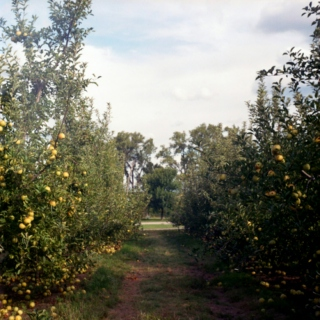 Le Verger -- The Orchard