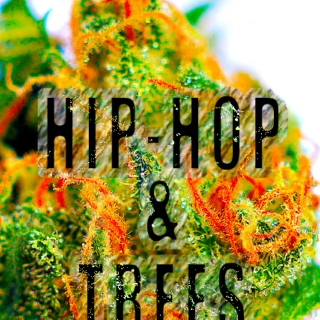 10.7.11 - HIPHOP&TREES