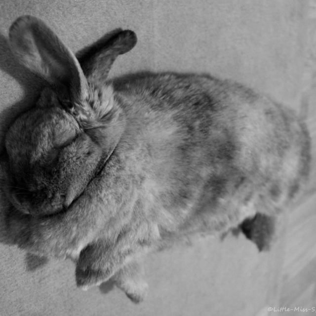 Tired Bunny