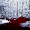 A Week in the Red Pool.