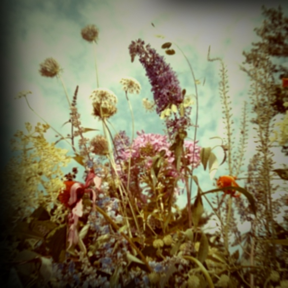 To an Insignificant Flower Obscurely Blooming in a Lonely Wild