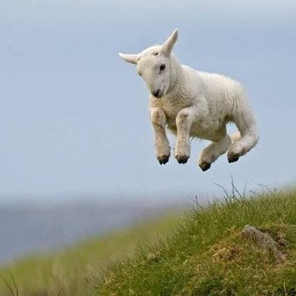 Little Lamb, live one day at a time