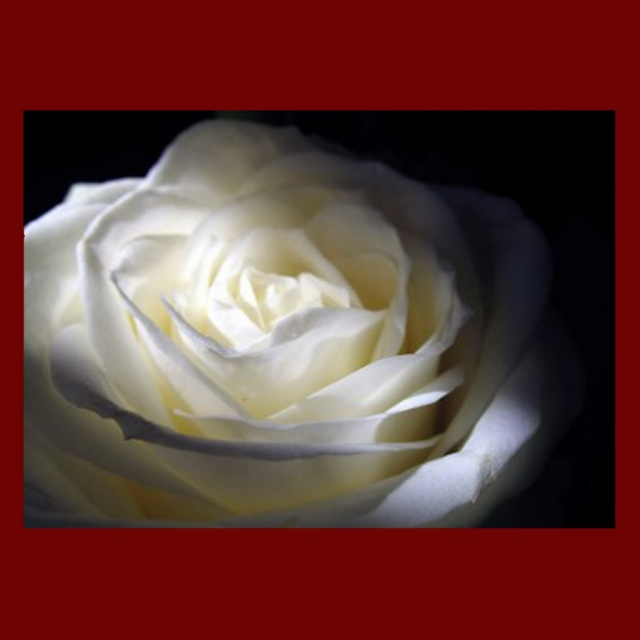 The Eclectic Rose I