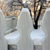 Little White Picket Fence