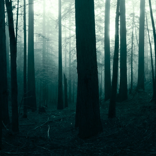 the woods are lovely, dark, and deep.
