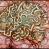 Right To The Brain
