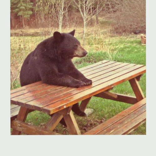 just a bear on a bench