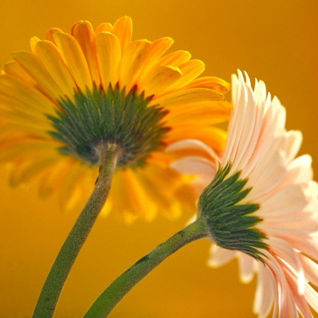 don't you think daisies are the friendliest flowers??