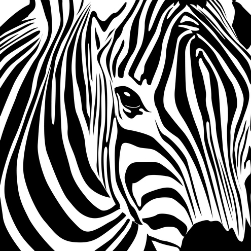 Is zebras born with stripes?