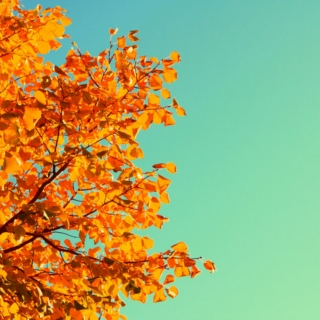 Autumnal Songs For Autumnal Days