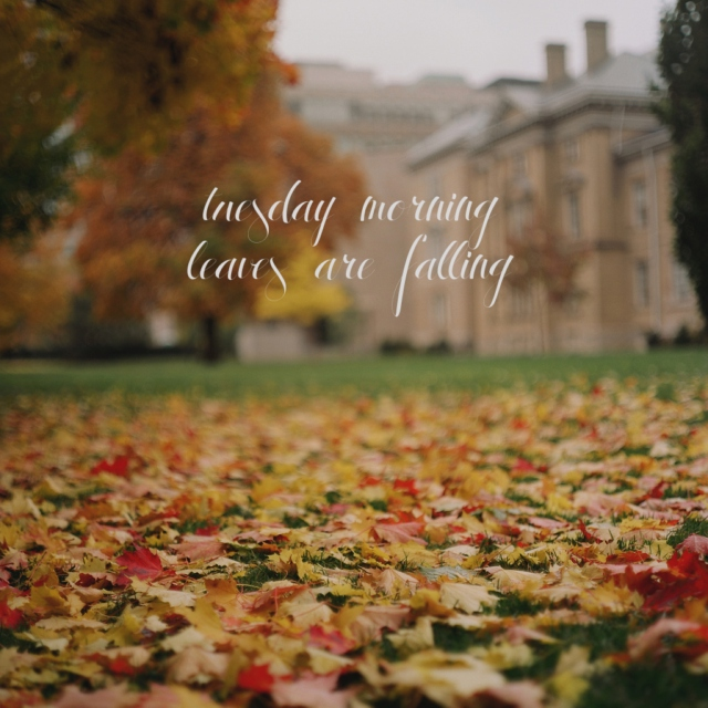 tuesday morning; leaves are falling.