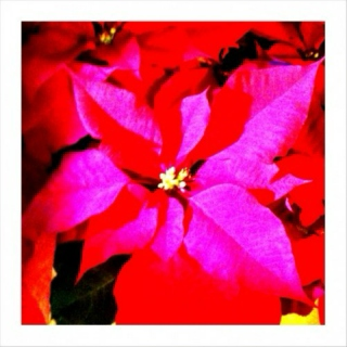 a winter's red ::  10dec09 mix