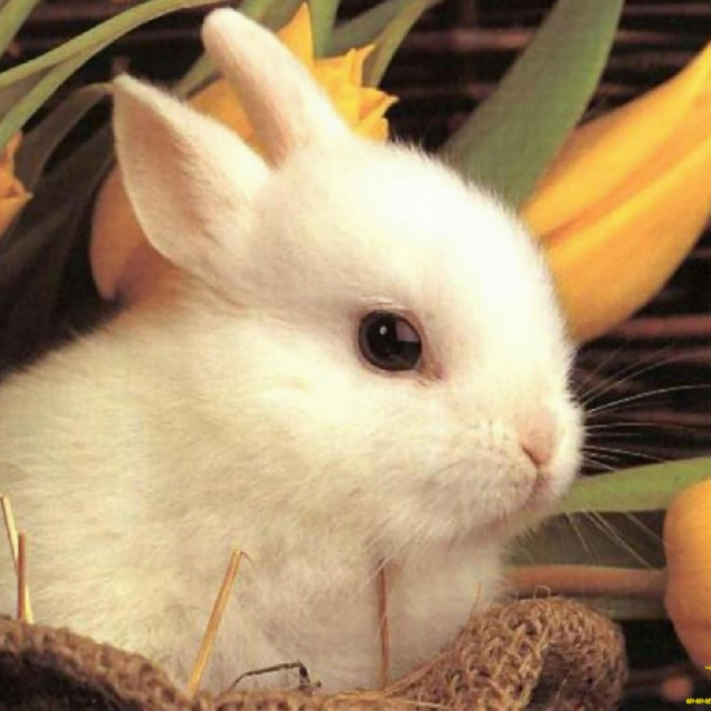 Today is Easter.