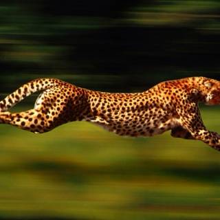 Run like a Cheetah