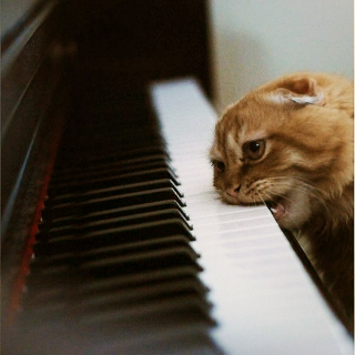 Covers so good, your cat tryin to play em.