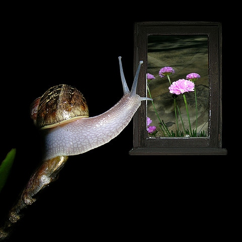 Jean P. Snail Dreamed Of The Out From Within (An Existential Kierkegaardian Loop) #400