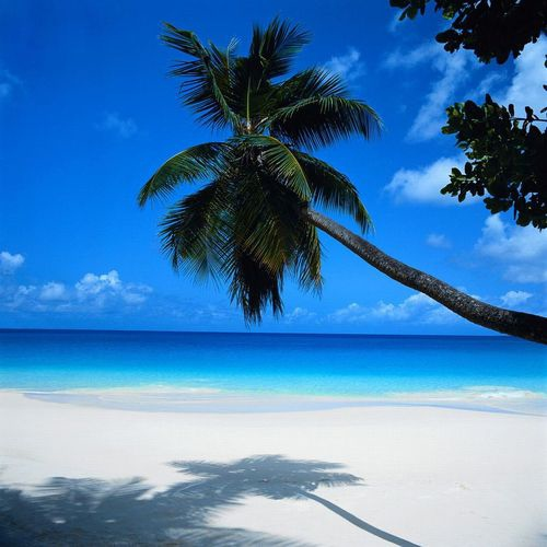 The Playlist to your Paradise Beach ♥