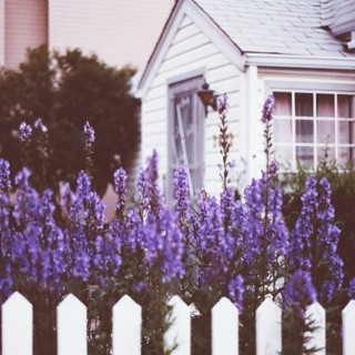Lavender-covered loneliness