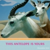 This Antelope Is Yours