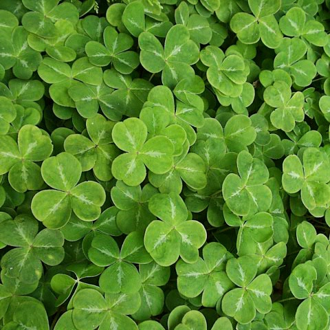An Ode to St. Patrick