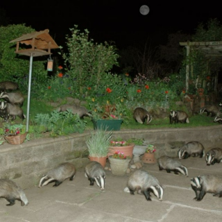 Illegal Badger Rave Music...
