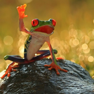 Frog Rap comming back now.