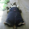 A Cat Wearing Overalls.