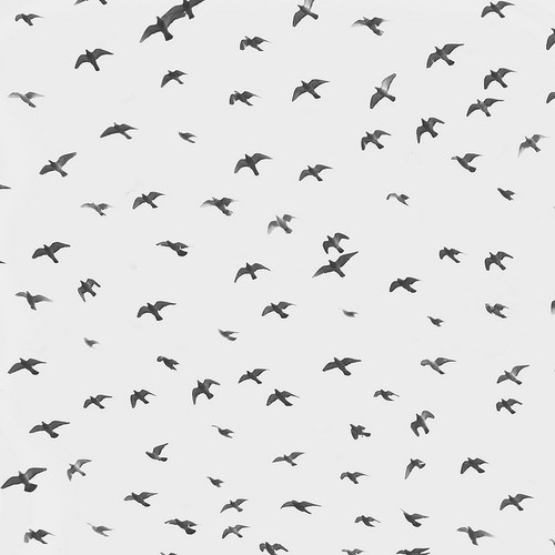 We eventually fly away with our imagination.