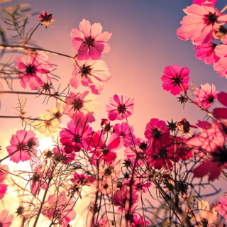 Flowers and Stuff: A Spring Playlist