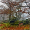 Mists and mellow fruitfulness